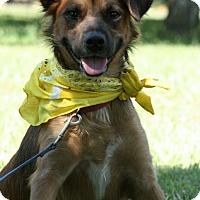 Adopt A Pet :: Skye - Glastonbury, CT