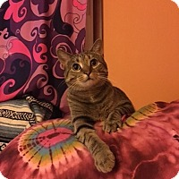 Adopt A Pet :: Daisy - Des Moines, IA