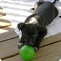 Adopt A Pet :: Speck - Montgomery, AL