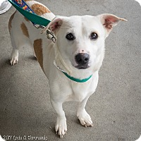 Adopt A Pet :: Baby - Loudonville, NY