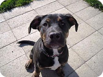 Plott Hound Mix Puppy for adoption in Meridian, Idaho - Morgan