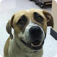 Adopt A Pet :: Scott - Gilbert, AZ