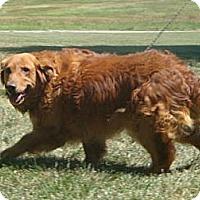 Adopt A Pet :: Austin - Denver, CO