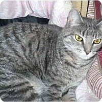 Adopt A Pet :: Bianca - Colmar, PA