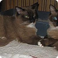 Adopt A Pet :: Gracie and Lacie - Dallas, TX