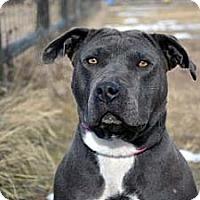 Adopt A Pet :: Lady - Cheyenne, WY