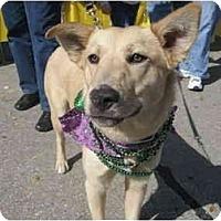 Adopt A Pet :: Bubbles - Kingwood, TX