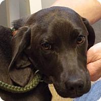 Adopt A Pet :: Kelsey - Murphy, NC