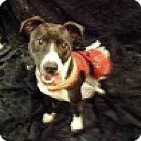 Adopt A Pet :: Sadie - Houston, TX