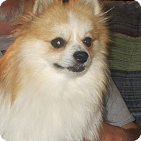 Adopt A Pet :: Teddy - Greenville, RI