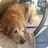 Adopt A Pet :: Lady - Danbury, CT