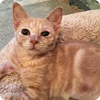 Adopt A Pet :: Buttons - East Hanover, NJ