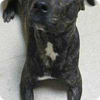 Adopt A Pet :: Thomas - Gary, IN