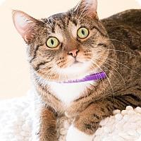 Adopt A Pet :: Hughie - Chicago, IL