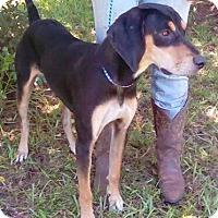 Adopt A Pet :: Ellie Mae - Orlando, FL