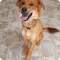 Adopt A Pet :: Fritz - Fennville, MI