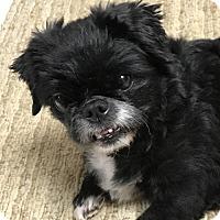 Adopt A Pet :: Suzi - Ellijay, GA