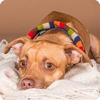 Adopt A Pet :: Jorge - Northbrook, IL