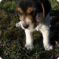 Adopt A Pet :: Fresia - Danbury, CT