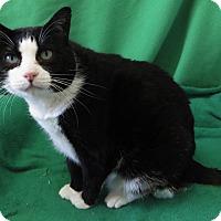 Adopt A Pet :: Petey - Colorado Springs, CO