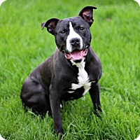 Adopt A Pet :: Chase - Wymore, NE