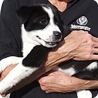 Adopt A Pet :: Lulu - Danbury, CT