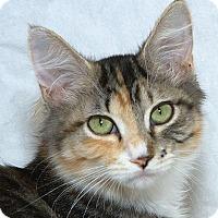Adopt A Pet :: Sweet Pea B - Sacramento, CA