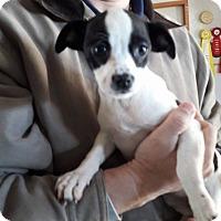 Adopt A Pet :: Darla - Wytheville, VA