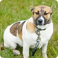 Adopt A Pet :: Gunther **URGENT** - Columbia, TN