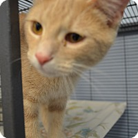 Adopt A Pet :: Nala - Martinsville, IN