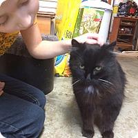 Adopt A Pet :: Lady - Lombard, IL