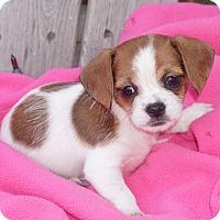 Adopt A Pet :: Lola - La Habra Heights, CA