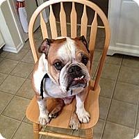 Adopt A Pet :: Maize - Strongsville, OH