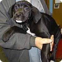 Adopt A Pet :: Paige - Antioch, IL