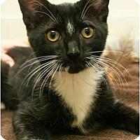 Adopt A Pet :: Sebastian - Secaucus, NJ