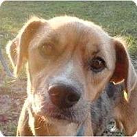 Adopt A Pet :: Mendy - Allentown, PA