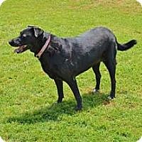 Adopt A Pet :: Lady - Garland, TX