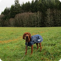 Adopt A Pet :: Bailey - Tillamook, OR