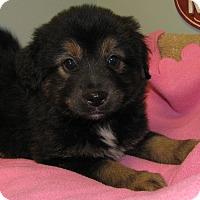 Adopt A Pet :: Flufalapogos - Groton, MA