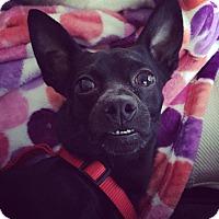 Adopt A Pet :: Rocket - Newtown, CT