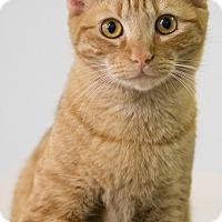 Adopt A Pet :: RAYNE - Houston, TX