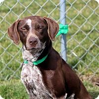 Adopt A Pet :: Cheri - Liberty Center, OH