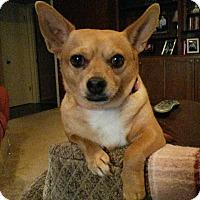 Adopt A Pet :: Sweetie - Baton Rouge, LA