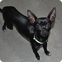 Adopt A Pet :: Bubba - Meridian, ID