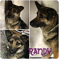 Adopt A Pet :: Randy - Fort Valley, GA