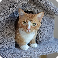 Adopt A Pet :: Flash Gordon - St. Louis, MO