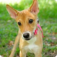 Adopt A Pet :: Katie - Surrey, BC