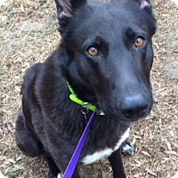 Adopt A Pet :: Berkeley - Greeneville, TN