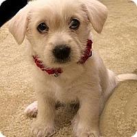Adopt A Pet :: Quin - La Habra Heights, CA