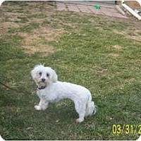 Adopt A Pet :: GEORGIA - Rossford, OH